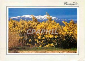 Moderne Karte Visage du Roussillon au Printemps Foret de mimosas sur fond de Canigou