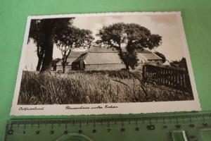 Tolle alte Karte - Ostfriesland - Bauernhaus unter Eichen  - 40er Jahre