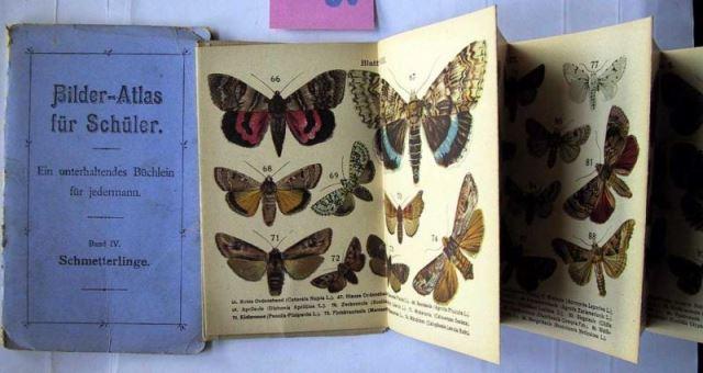 Ohne Verfasser: Bilder-Atlas für Schüler. Ein unterhaltendes Büchlein für jedermann. Band IV: Schmetterlinge.
