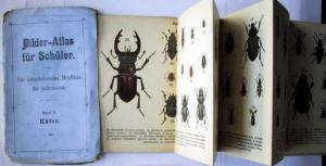 Ohne Verfasser: Bilder-Atlas für Schüler. Ein unterhaltendes Büchlein für jedermann. Band V: Käfer.