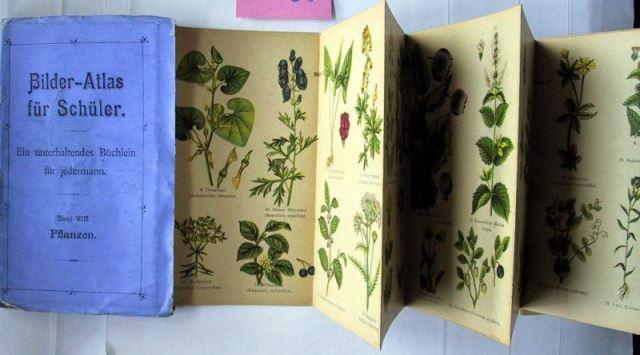 Ohne Verfasser: Bilder-Atlas für Schüler. Ein unterhaltendes Büchlein für jedermann. Band VIII: Pflanzen.