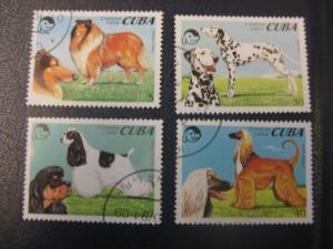 Hunde, 4 Werte, Cuba
