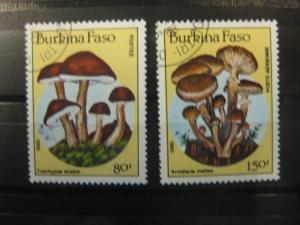 Pilze, Burkina-Faso