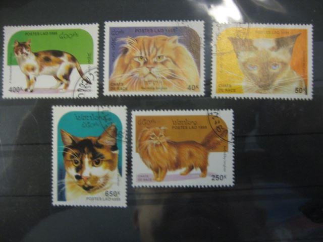 Katzen, Laos, 5 Werte