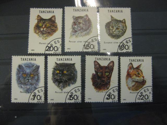 Katzen, Tanzania, 7 Werte