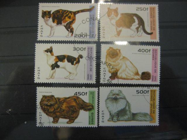 Katzen, Guinea, 6 Werte