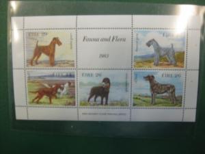 Hunde, 5 Werte, Irland