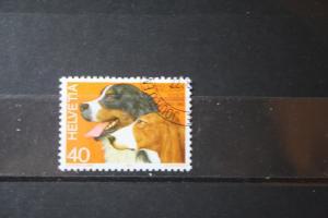 Schweiz, Hunde, Tiere