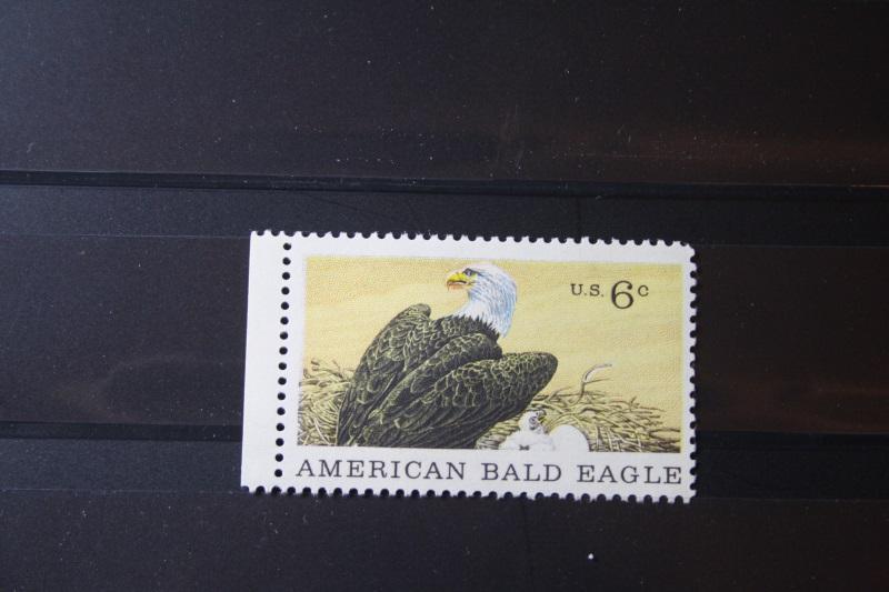 USA, Tiere, Vogel, Vögel