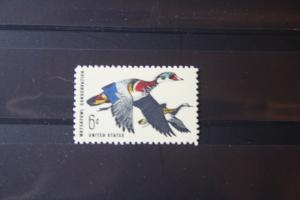 USA, Tiere, Vogel