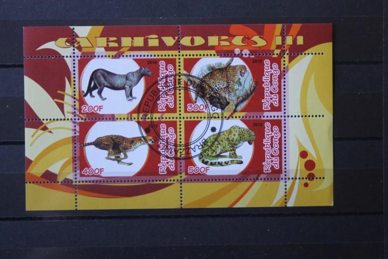 Geparden; Leoparden, Kongo 2010 0