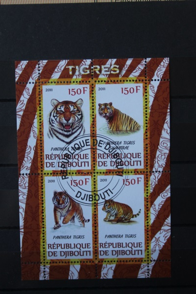 Tiger, Djibuti 2011 0