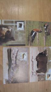Maximumkarten MK Bedrohte Tiere 1985
