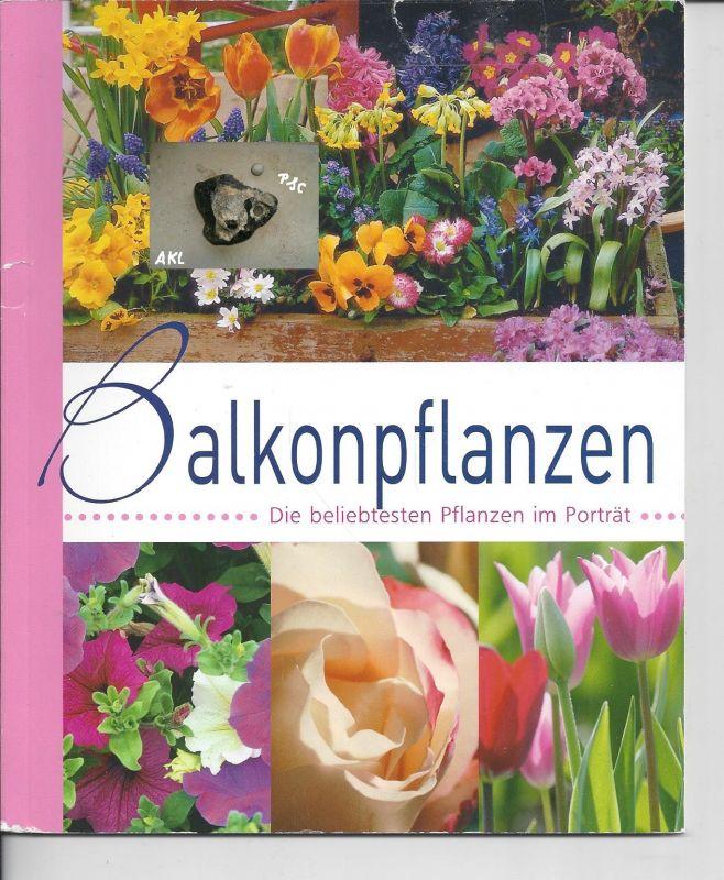 Balkonpflanzen, die beliebtesten Pflanzen im Porträt