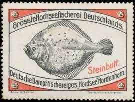 Steinbutt-Fisch
