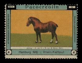 Pacocreolin Pferd