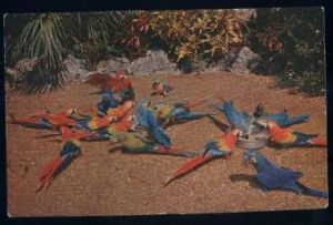 "USA. Florida. ""Chow Time"" of the Parrot Jungle"