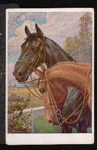 Edle Pferde.