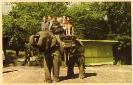 0 Elefant