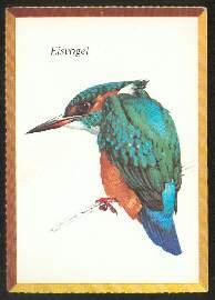 x02556; Eisvogel.