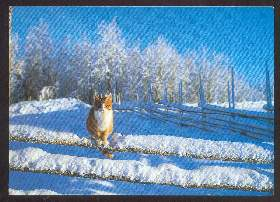x02608; Katze.
