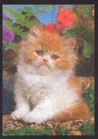 x02610; Katze.