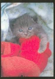 x02612; Katze.
