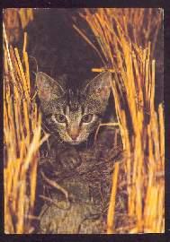 x02615; Katze.