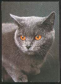 x02619; Katze.