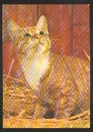 x02637; Katze.