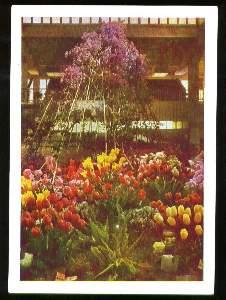 x03849; Hamburg. Internationale Gartenbau Ausstellung: Frühjahrs Eröffnungsschau in der Ernst Merck Halle.
