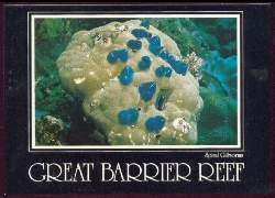 x06333; North Queensland. Australia. Great Barrier Reef.
