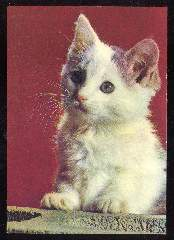 x11814; Katze.