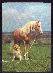 x12038; Pferd und Hund.