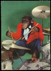 x13510; Affe spielt auf einem Schlagzeug.