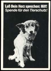 x13810; Lass Dein Herz sprechen: Hilf! Spende für den Tierschutz!.
