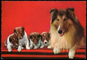 x13811; Hund mit Kinder.