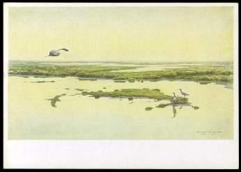 x14080; Karl E.Olszewski: Fischreiher und Brachvögel.