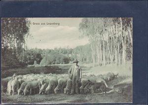 AK Gruss aus Leuenberg ( Schafherde) 1912