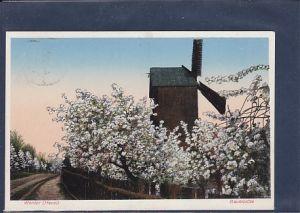 AK Werder ( Havel) Baumblüte 1935
