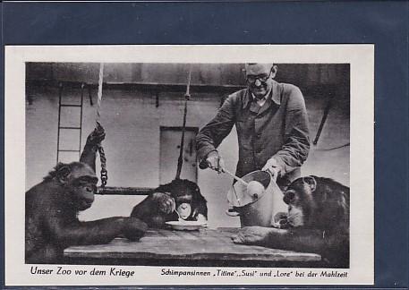 AK Unser Zoo vor dem Kriege Schimpansinnen Titine Susi und Lore bei der Mahlzeit 1940