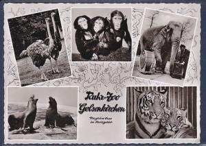 AK Ruhr Zoo Gelsenkirchen 5.Ansichten 1962