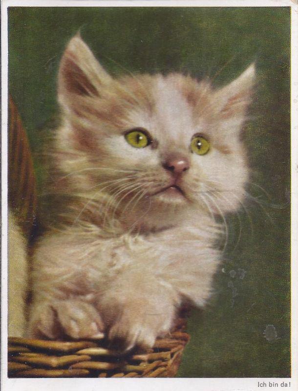 94508 junge Katze im Korb