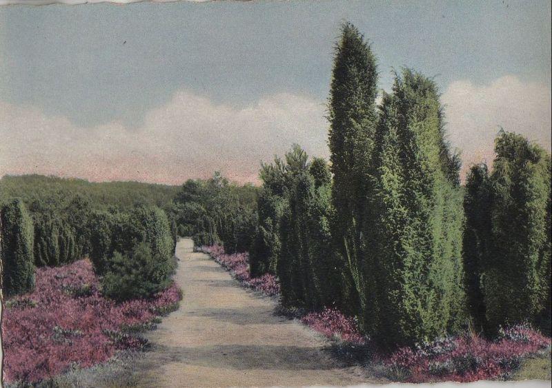 Lüneburger Heide - Wacholderweg - ca. 1975