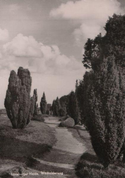 Lüneburger Heide - Wacholderweg - ca. 1960 0