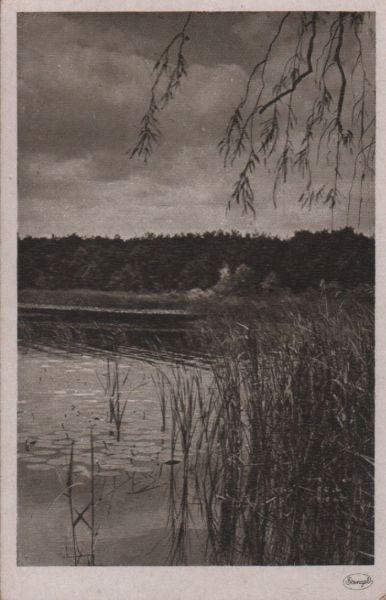 Schilf am Seeufer - ca. 1950 0