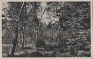 Niederlande - Utrechtse Heuvelrug - Driebergen, het grote bos - 1958