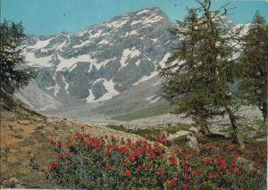 Österreich - Österreich - Bad Gastein - Böckstein, Alpenrosen im Anlauftal - 1965