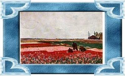 Rhynsburg v.1913 Tulpenfelder (10385)