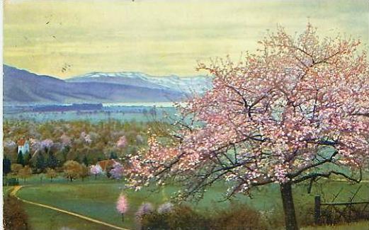 Lochau v.1915 Dorf & Bodensee (17624)